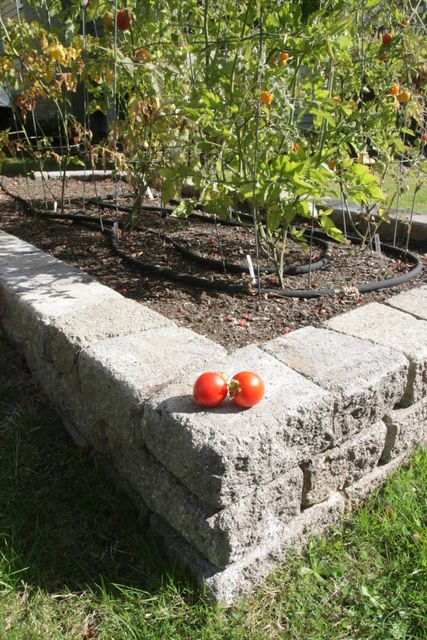 Raised vegetable bed built with RomanStack blocks.